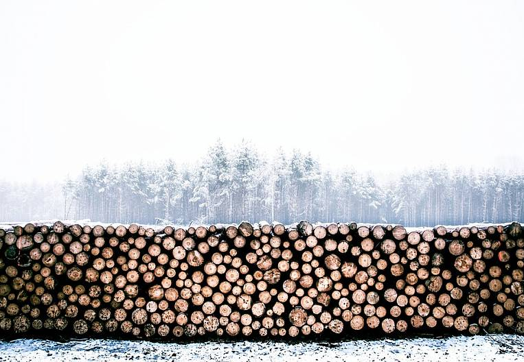 Far Eastern foresters offered transparent bargaining