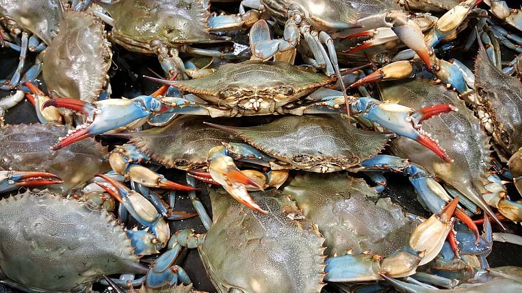 Large consignment of crab and salmon seized in Primorye