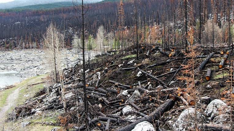 Forest fire area increased again in Chukotka
