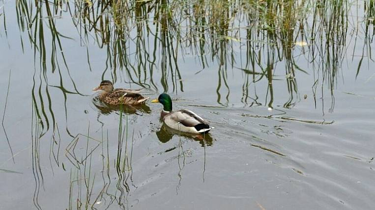 Coronavirus affected the timing of hunting in Primorye