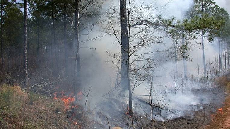 Large forest fires predict in Khabarovsk Territory