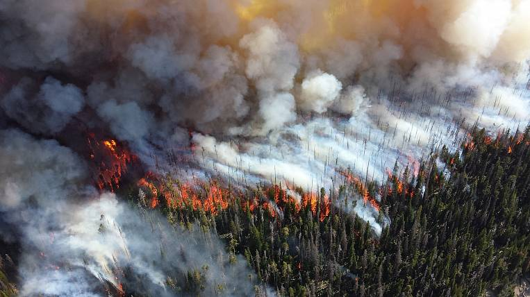 A large forest fire is extinguished in a reserve in the Khabarovsk Territory