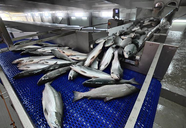 Leave all the fish in Russia?