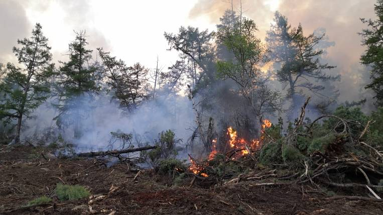 Emergency mode introduced in the forests of Kamchatka