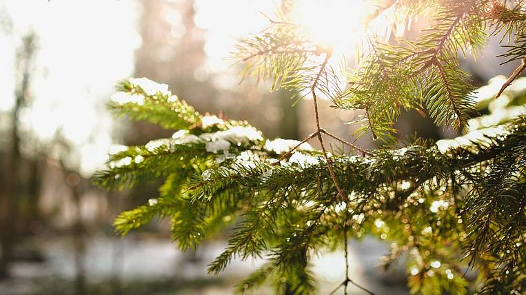 Warming has come to Primorsky Krai