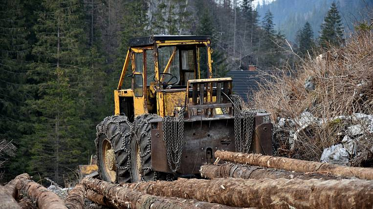The case of official forgery brought to the head of the Kamchatka forestry