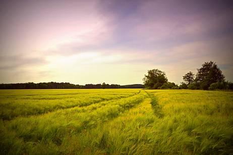 Sberbank developed the Green Insurance program in the field of ecology