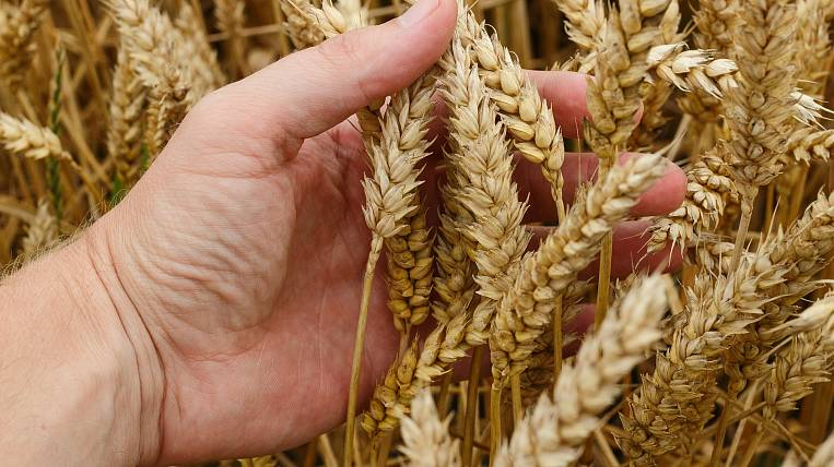 The government approved the extension of the zero duty on the export of wheat