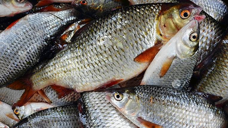 FAS opposed benefits for fisheries