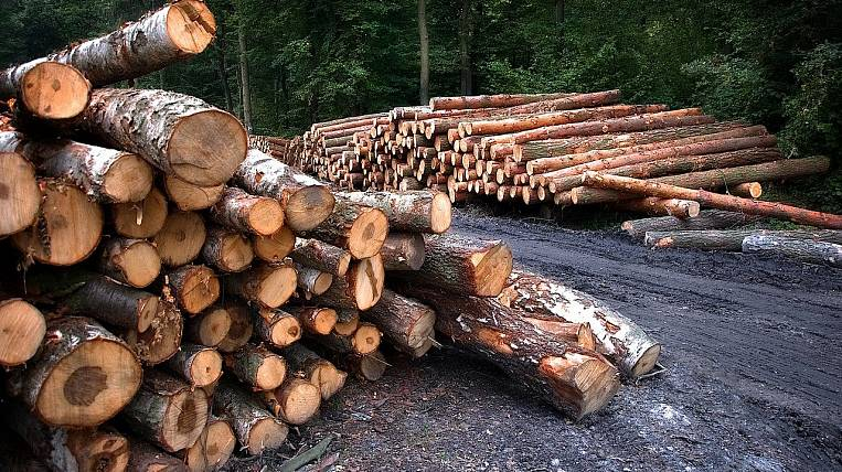 The number of illegal logging in the Angara region decreased by 38%
