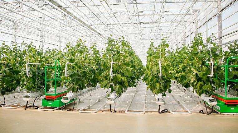 The unique Japanese greenhouse has become more in Yakutia