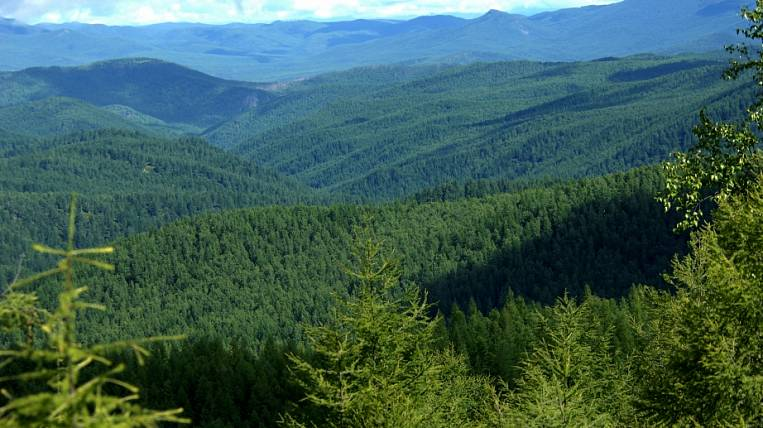 The government subcommission approved the state support of the forestry project in the Khabarovsk Territory