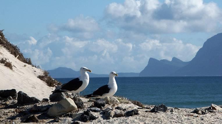 Environmentalists demand to protect Karaginsky Island in Kamchatka