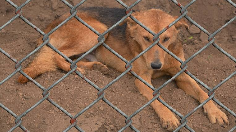 The director of a shelter in the Amur region faces a sentence for cruelty to animals