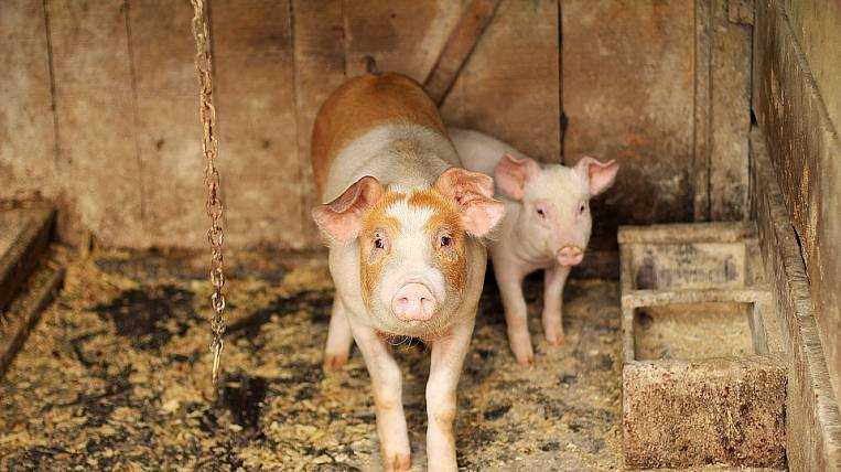 Emergency regime in Primorye: farm suspected outbreak of plague