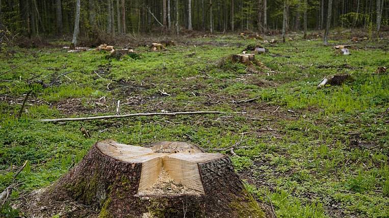 The cause of flooding in the Irkutsk region could be deforestation