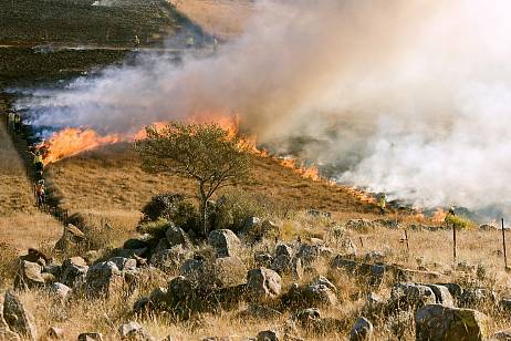 The area of forest fires decreased by 17 thousand hectares in the Angara region