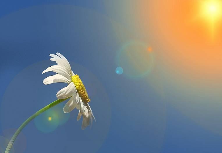 Ikigai - Japanese happiness for everyone